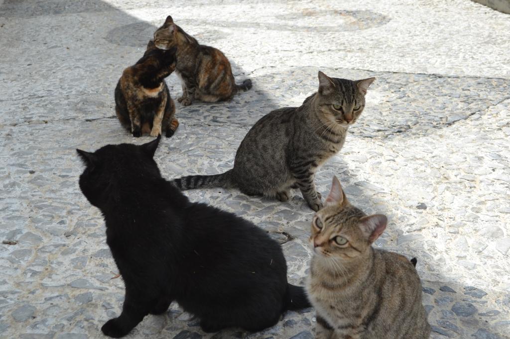 """""""Ostakaa kissa viidellä eurolla!"""" kuuluikin rouvashenkilön ääni."""