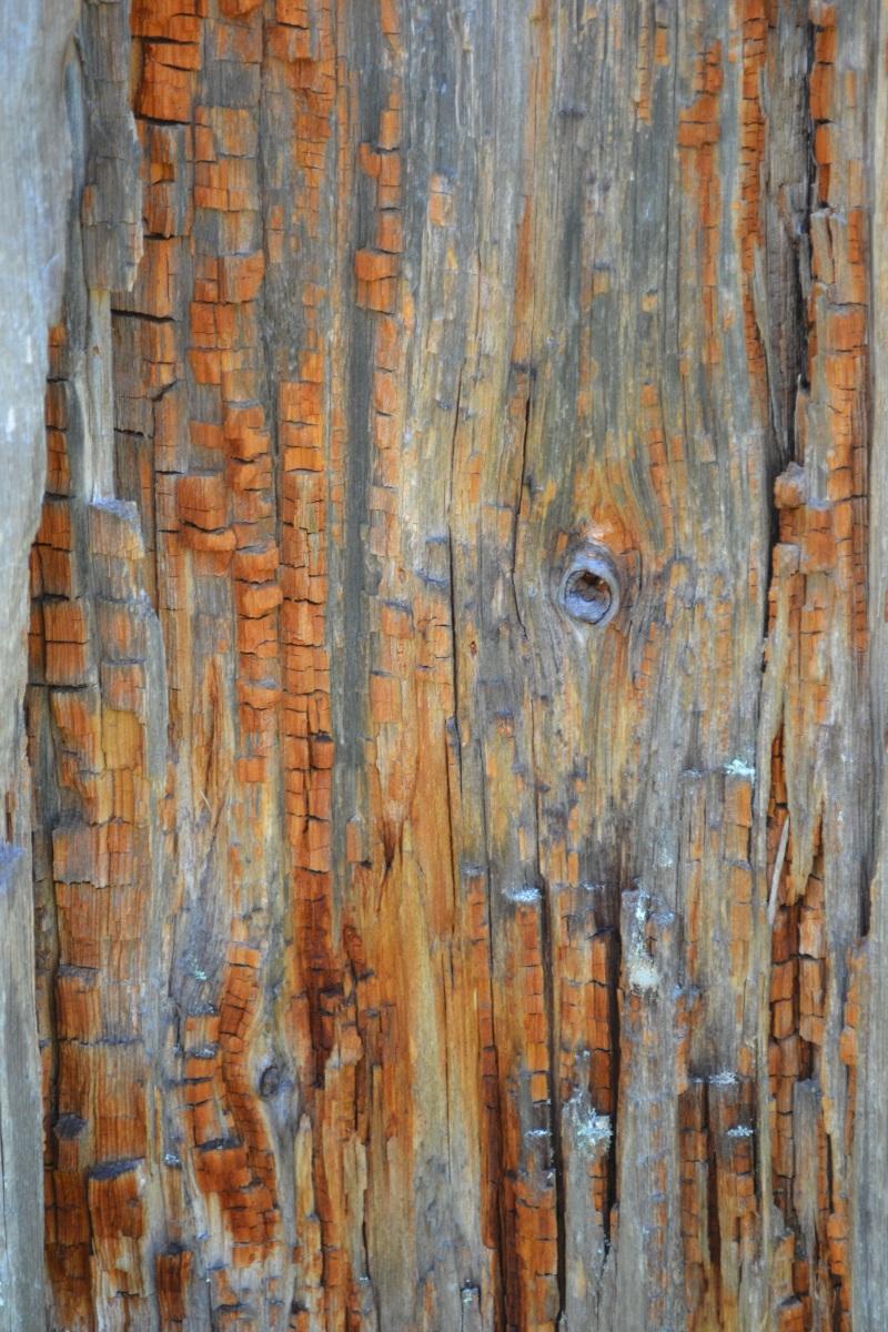 Mitä opittavaa meillä olisi kivikauden ihmisiltä?